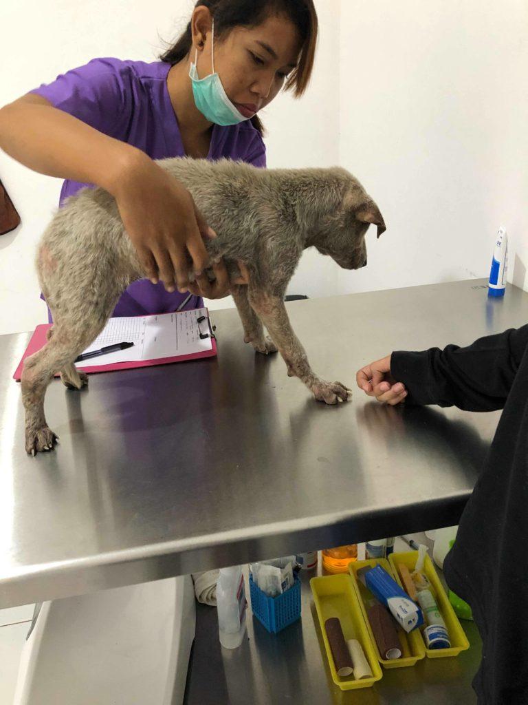 Kacang's first vet visit with Jean Mario & Dana, Bali, Indonesia