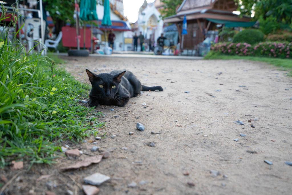 Cat in Wat Arun, Bangkok, Thailand