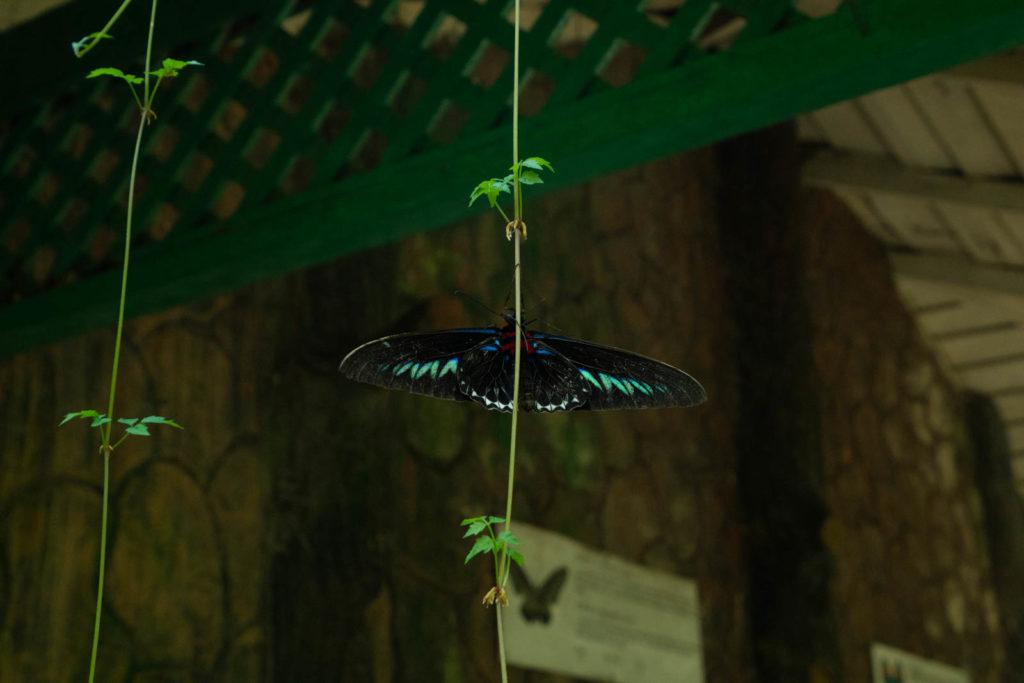 Butterfly Park, Perdana Botanical Gardens, Kuala Lumpur, Malaysia