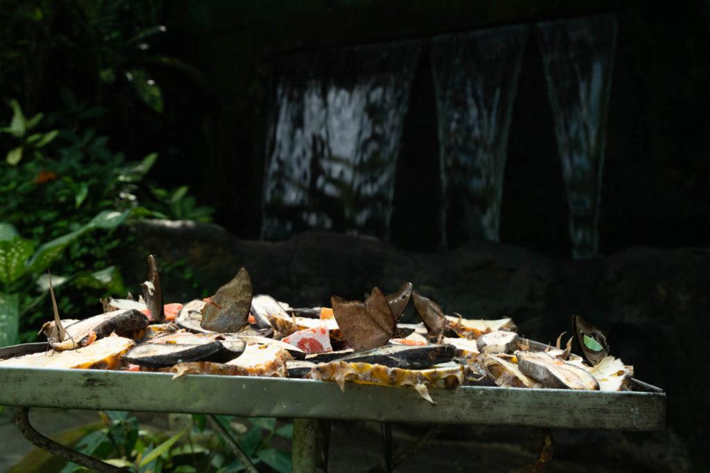 Butterfly Garden, Perdana Botanical Gardens, Kuala Lumpur, Malaysia