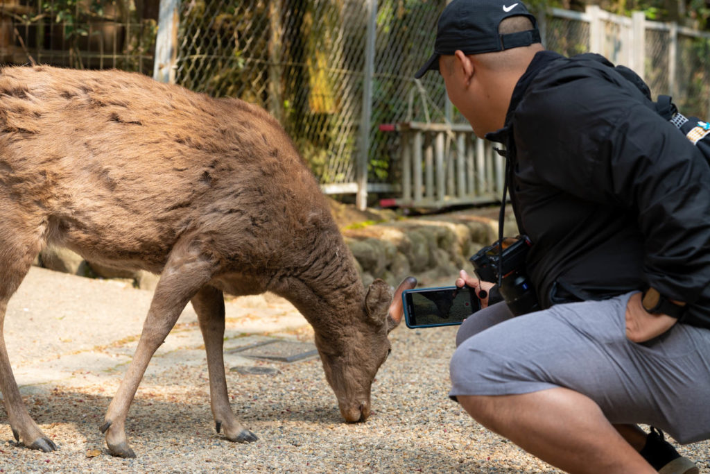 Carl and deer, Nara, Japan