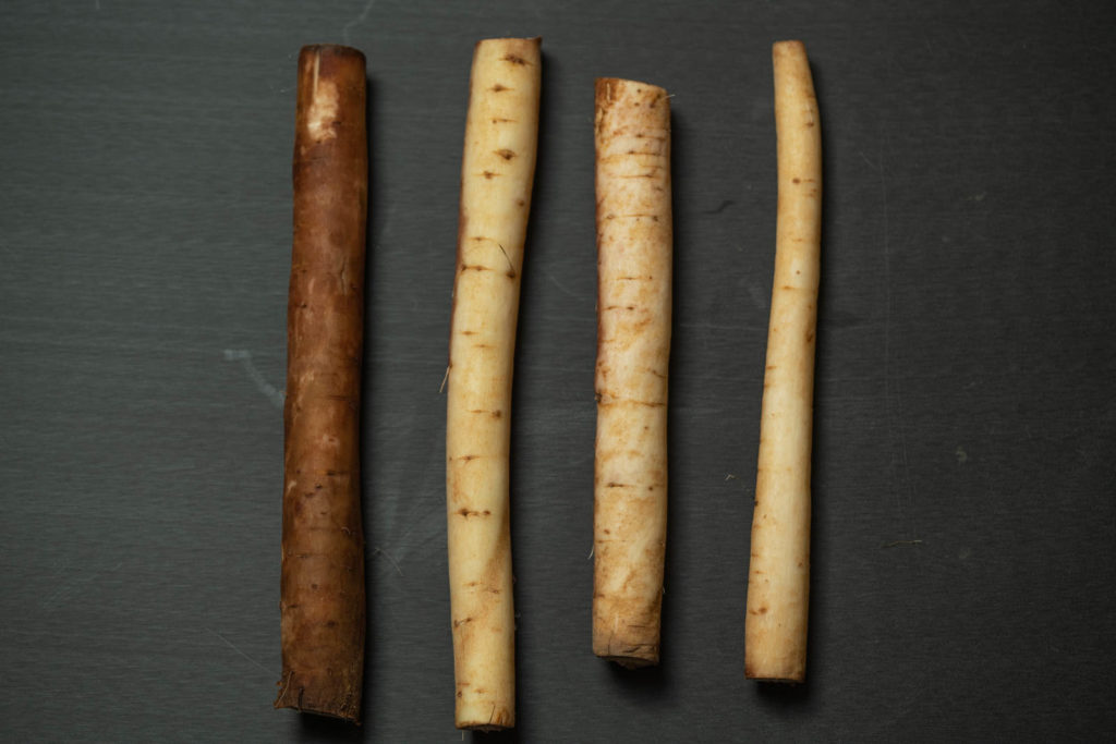 Various washed burdock root (gobo)