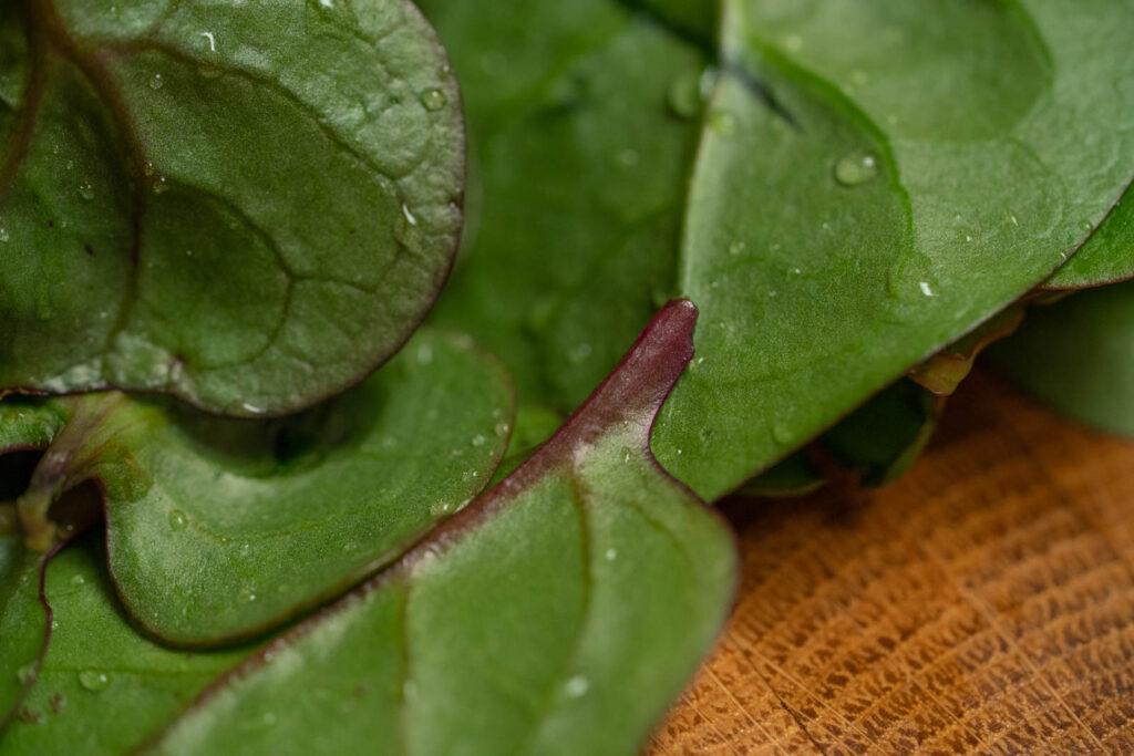 Detail: malabar spinach
