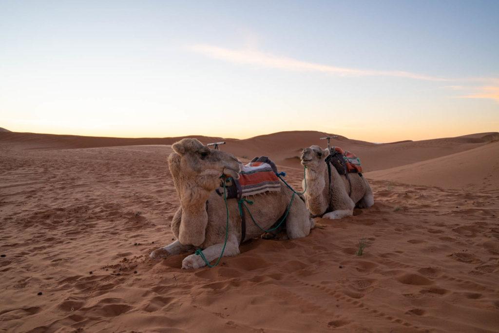 Ali & Sara's Desert Palace, Merzouga, Morocco