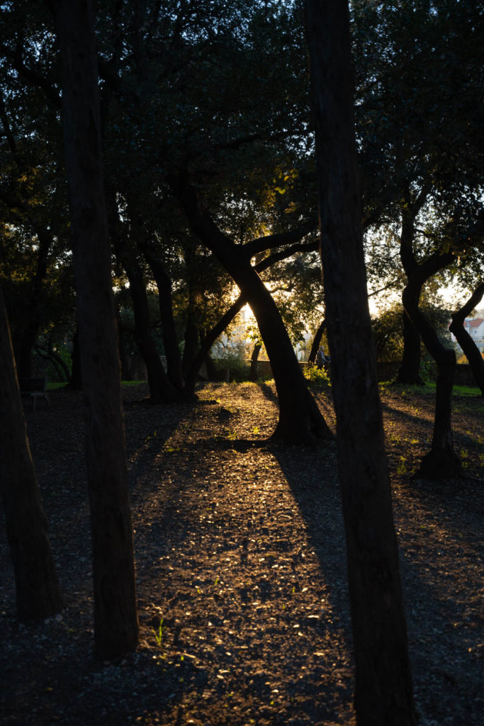 Arènes de Cimiez Garden