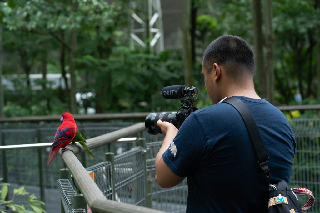 Carl recording lories, Singapore