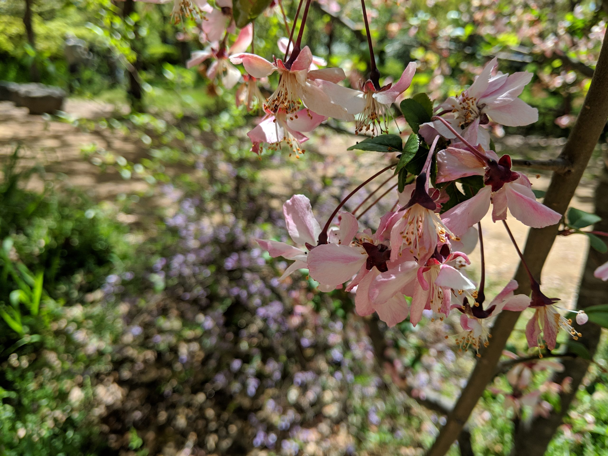 blossoms in Osaka Castle