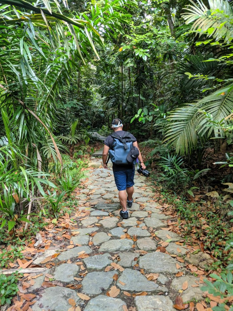 MacRitchie Trail, Singapore