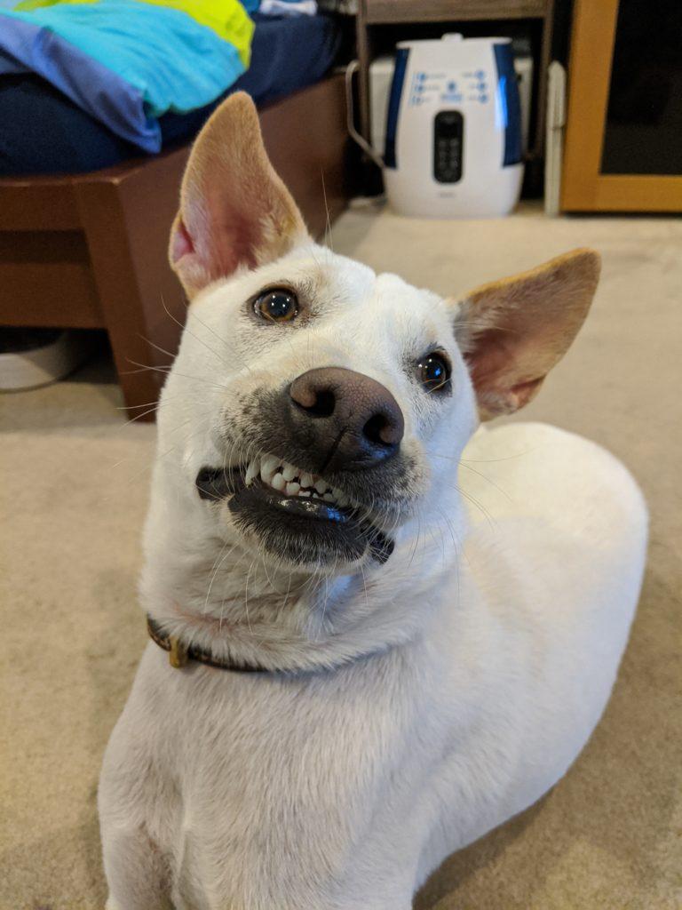 Kacang's teeth