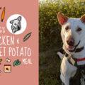 dog food recipe: chicken & sweet potato