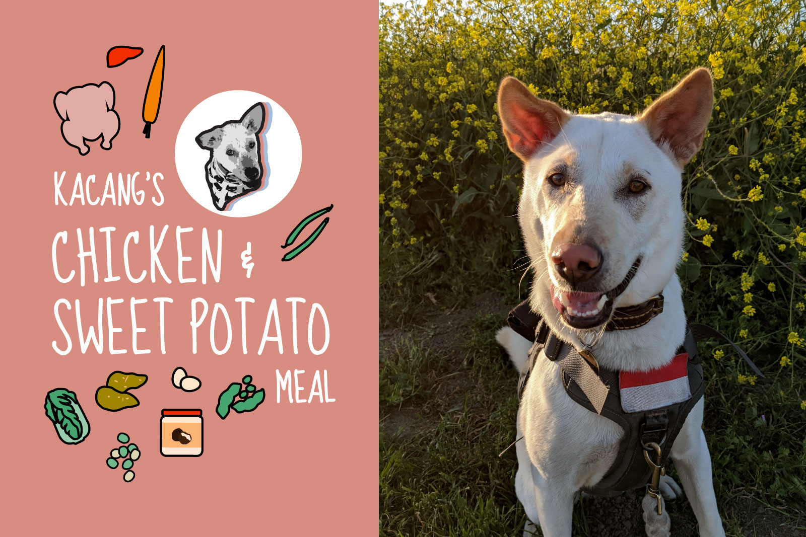 dog food recipe: chicken & sweet potato